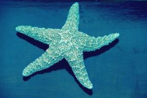 Seesterne im Ozean